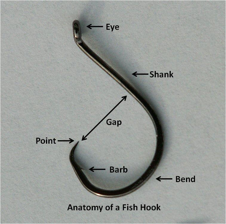 Anatomyofafishhook
