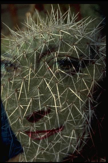 022_cactus02